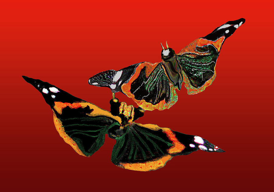 Butterfly Painting - Butterfly1 by Martin Hardy