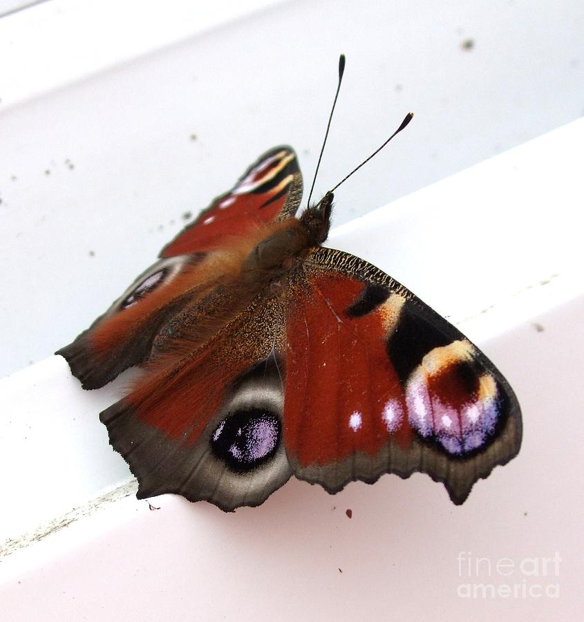 Butterfly Photograph - Butterflys Wing by Deborah Brewer