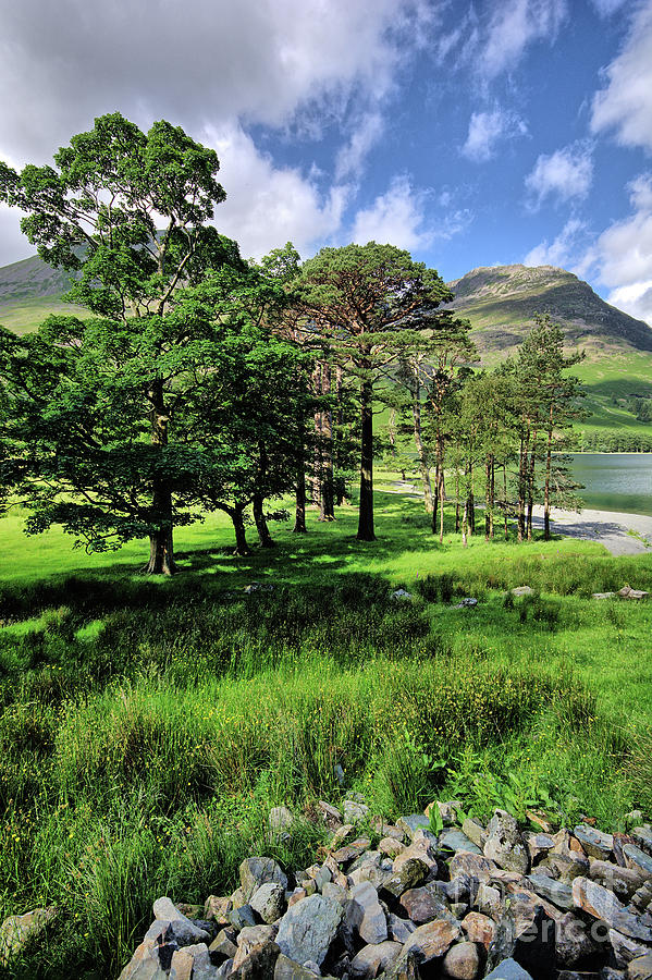 Buttermere Photograph - Buttermere Pines by Smart Aviation