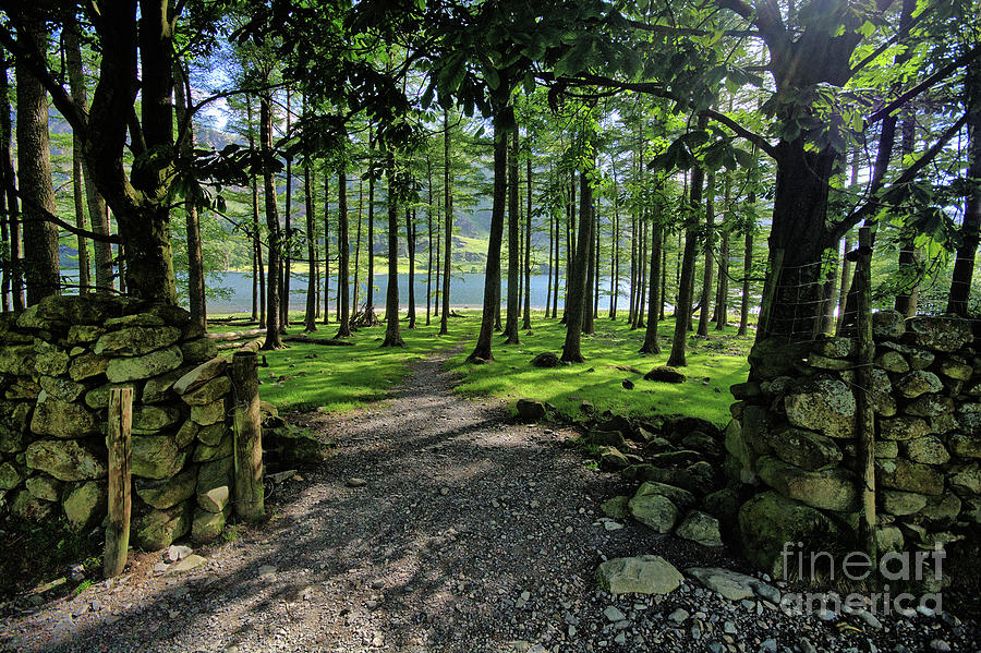 Buttermere Photograph - Buttermere Woods by Smart Aviation