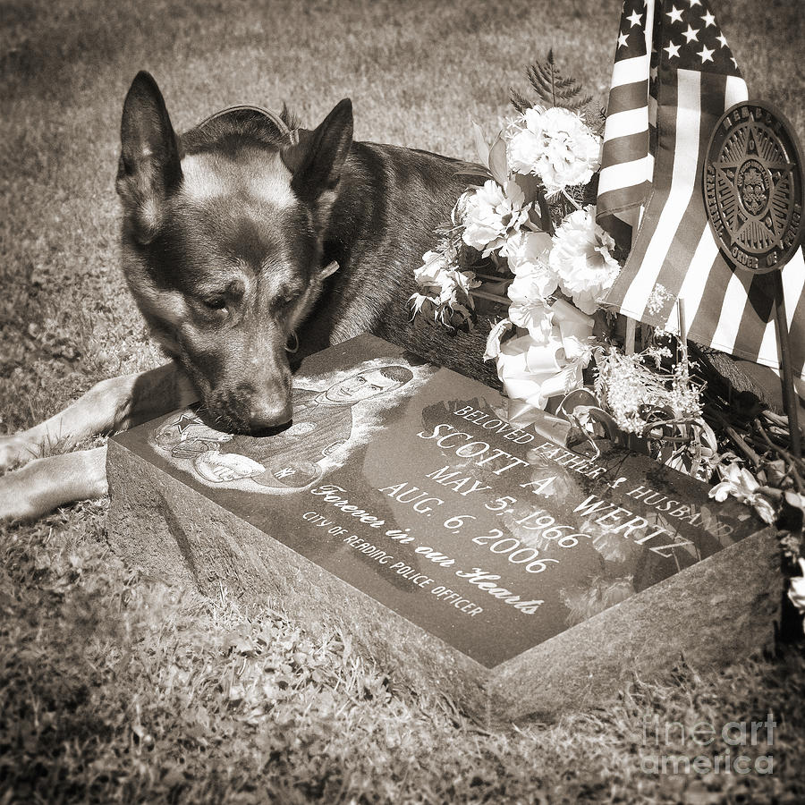K9 Police Photograph - Buy A Print. Show Your Support For Reading K9 Police.  Willow Street Pictures.  by Darren Modricker
