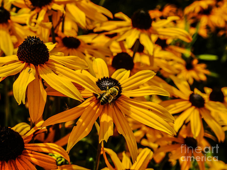 Yellow Photograph - Busy Bee by Jamel Watson