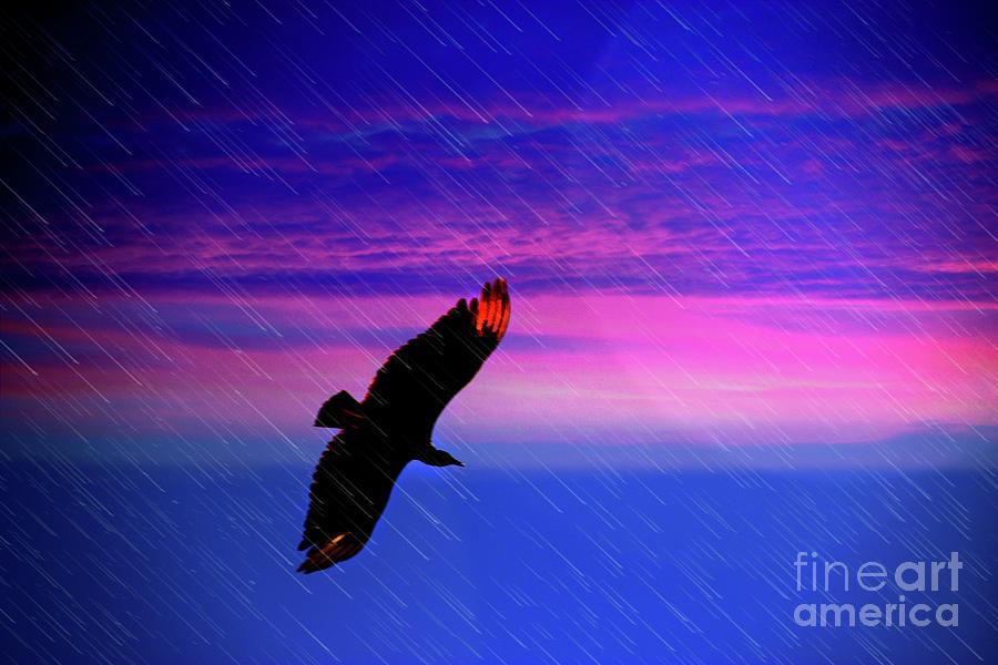 Buzzard Photograph - Buzzard In The Rain by Al Bourassa