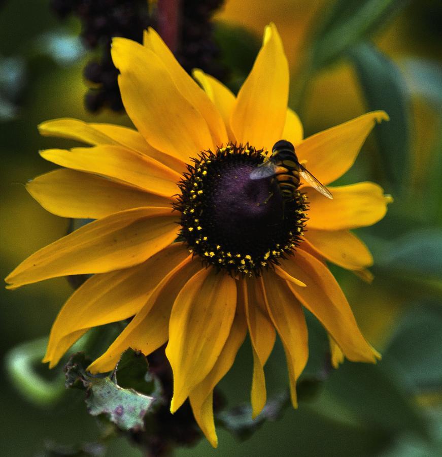 Flower Photograph - Buzzed by Robert McCubbin
