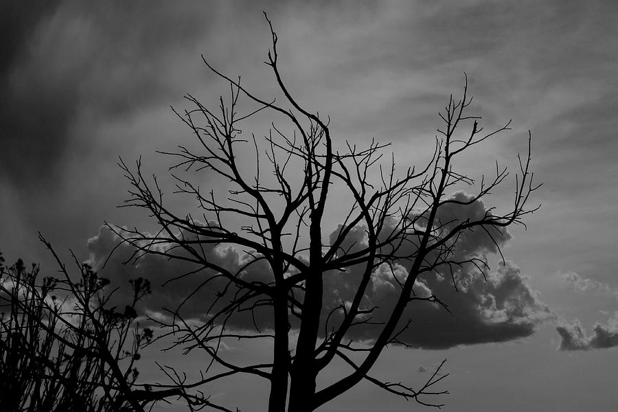 Black And White Photograph - BW2 by Wesley Hanna