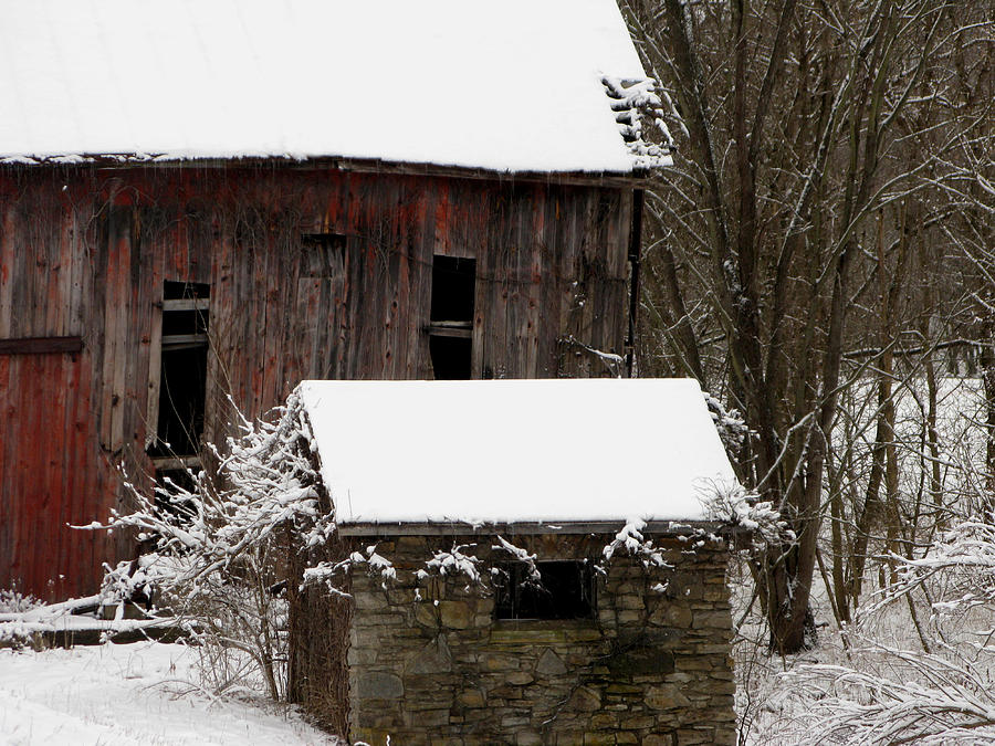 Country Photograph - By My Side by Martie DAndrea
