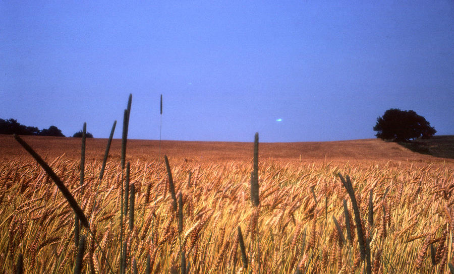 Wheat Photograph - By The Highway 2 by Lyle Crump