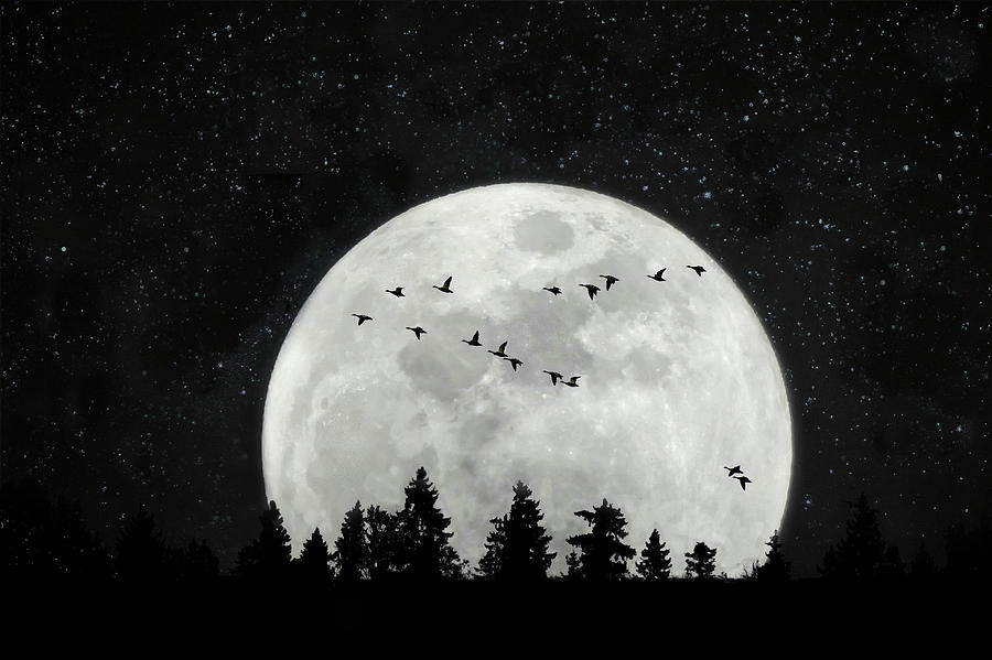 Silver Moon Photograph - By the Light of the Silvery Moon - Birds  by Andrea Kollo
