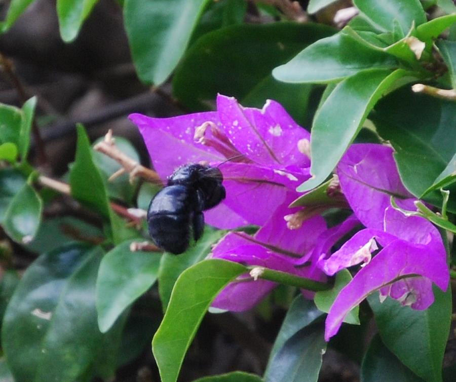 Bee Photograph - Bzzzz by Lakida Mcnair