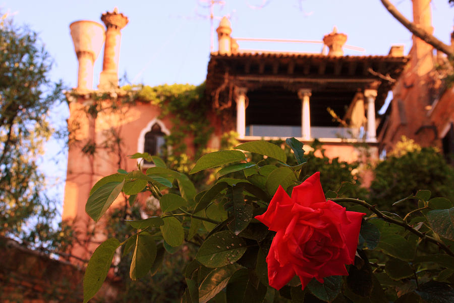Venice Photograph - Ca Dario In Venice With Rose by Michael Henderson