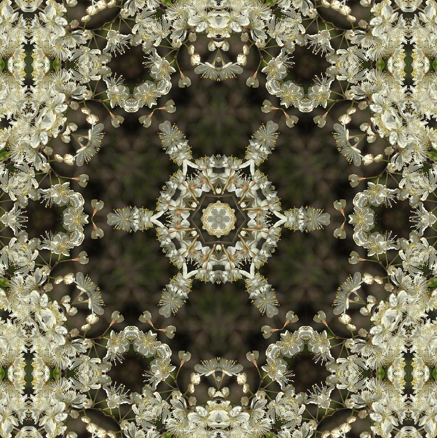 Canada Plum Kaleidoscope  by Valerie Kirkwood