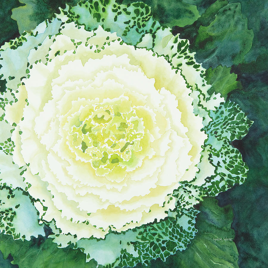 Cabbage Flower Painting By Lynda Bee White