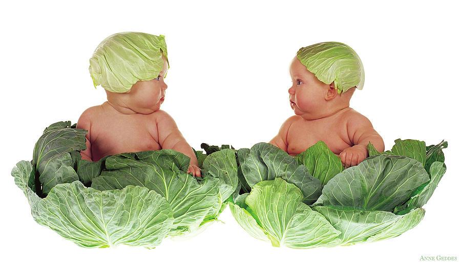 Baby Photograph - Cabbage Kids by Anne Geddes
