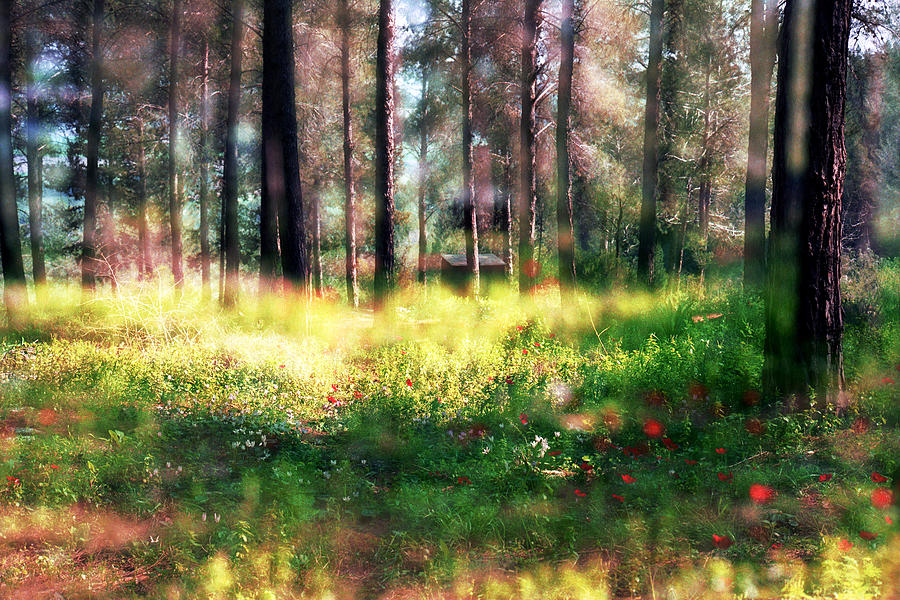 Impressionistic Photograph - Cabin In The Woods In Menashe Forest by Dubi Roman