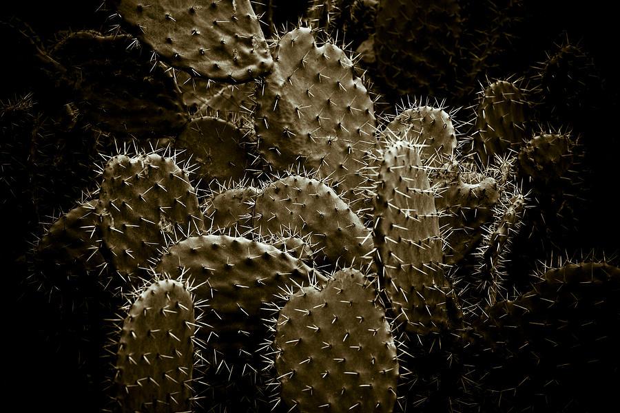 Cactaceae Photograph - Cactaceae by Frank Tschakert