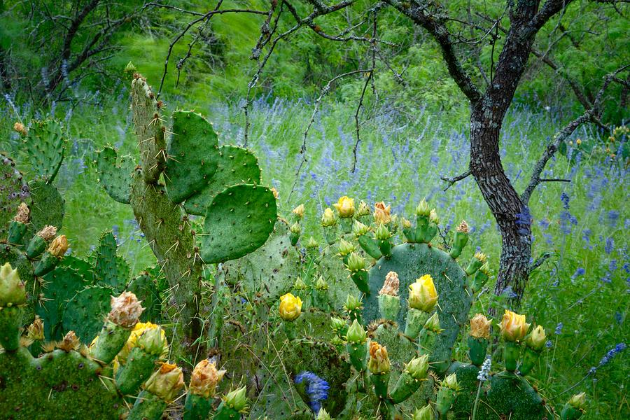 Cacti and Bluebonnets II by Jay Anne Boza