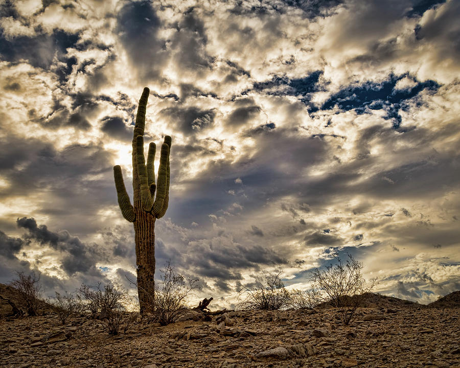 cactus thorns desert sky clouds iphone case