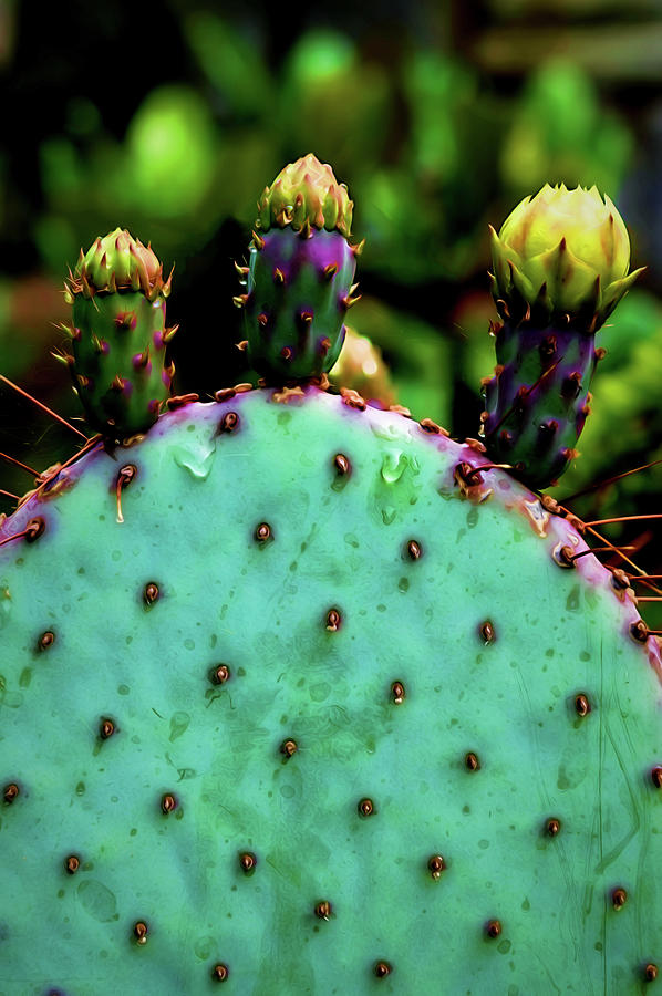 Cactus Photograph - Cacti and Friends by Jessica Manelis