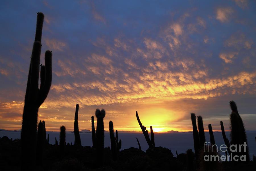 Cacti At Sunset Salar De Uyuni Bolivia
