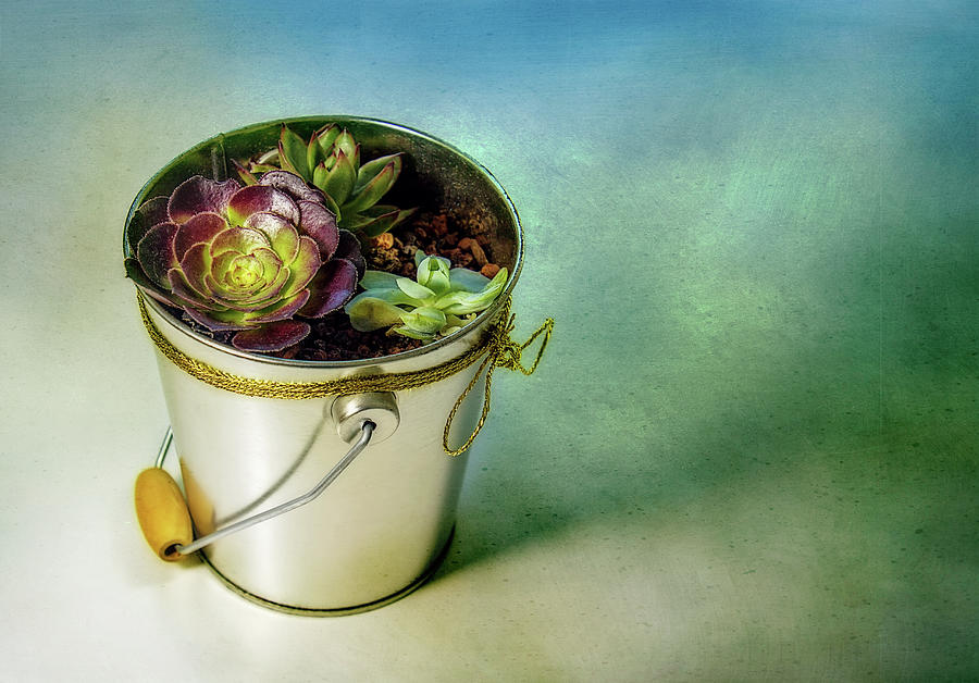 Cactus Digital Art - Cacti Bucket by Terry Davis