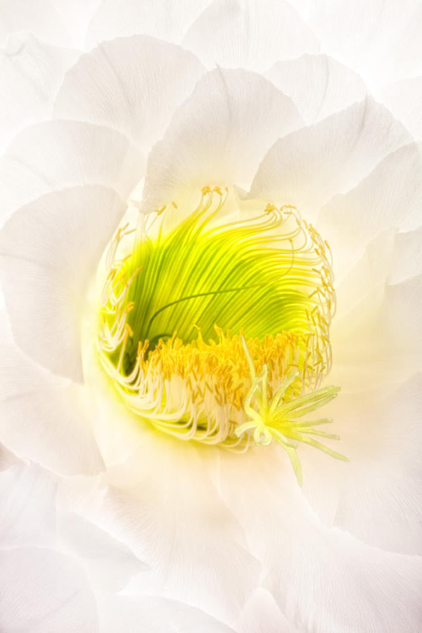 Flower Photograph - Cactus Bloom Number Five by Bob Coates