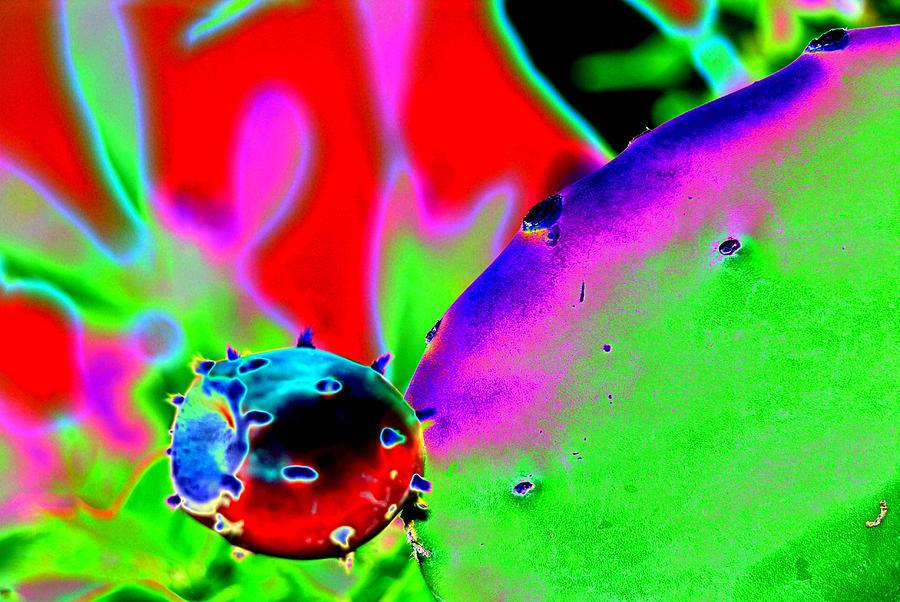 Cactus Digital Art - Cactus Bud by Peter  McIntosh
