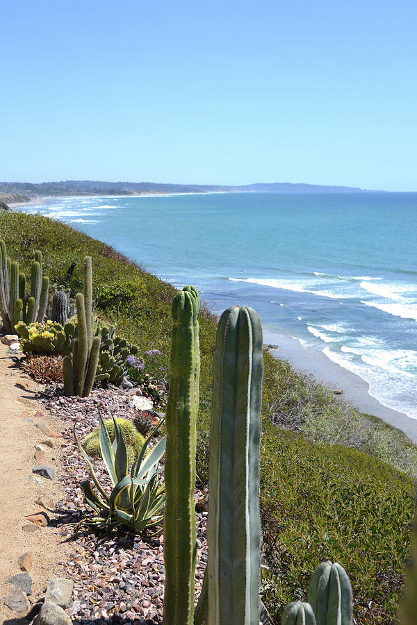 Cactus Photograph - Cactus by the Seaside by D Patrick Miller