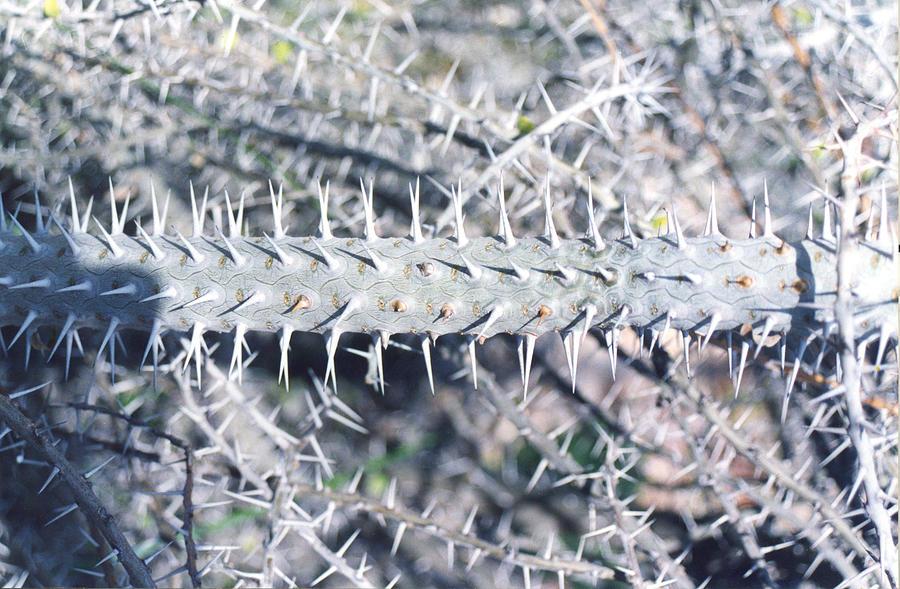 Cactus Photograph - Cactus  by Eliot LeBow