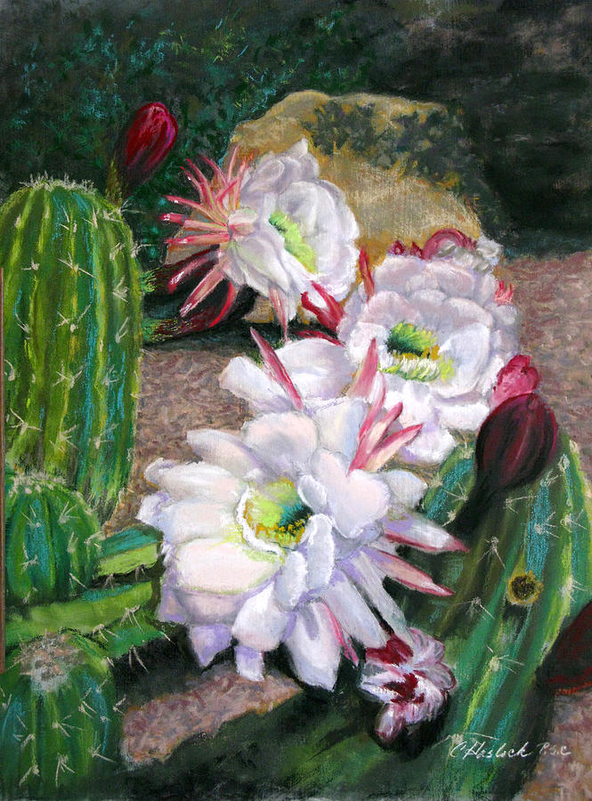 Floral Pastel - Cactus Flower by Carole Haslock