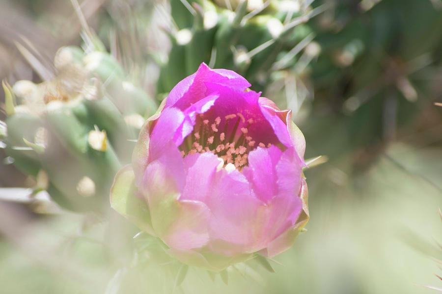 Cactus Photograph - Cactus Flower by Deborah Reinhardt - Adams