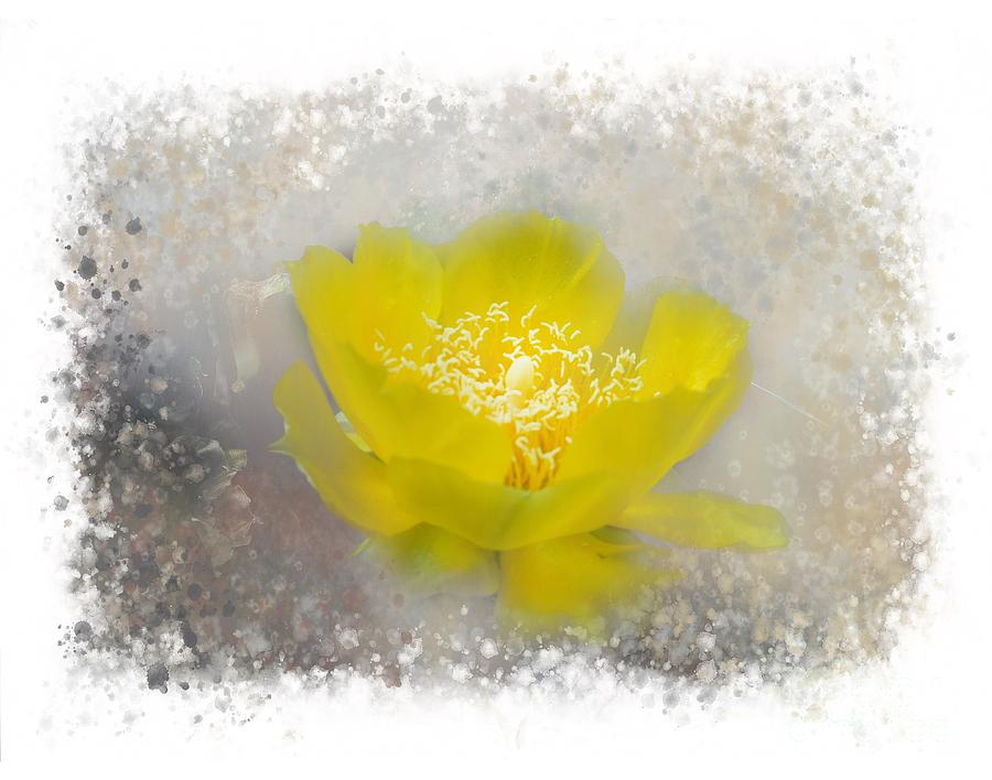 Floral Photograph - Cactus Flower by Judy Hall-Folde