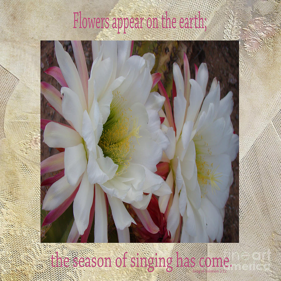 Cactus Flower Song Of Solomon Photograph By Beverly Guilliams