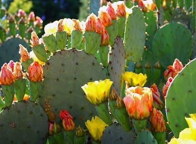 Cactus Photograph - Cactus Flower by Tom Dell