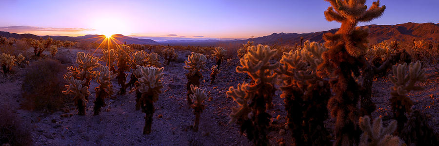 Burst Photograph - Prickly by Chad Dutson