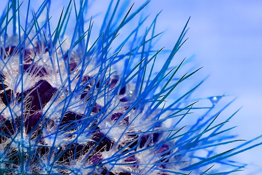 cactus in blue by Meirion Matthias