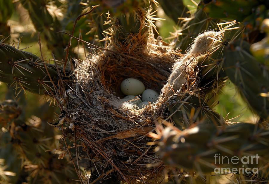 Cactus Photograph - Cactus Nest by David Lee Thompson