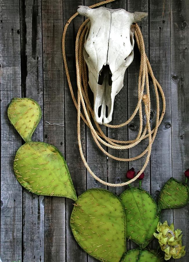 Cactus Rope And Steer 6021 Photograph