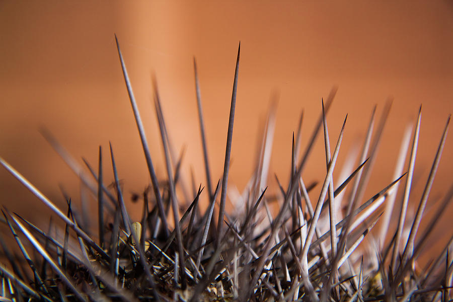 Cactus Spines by Rich Isaacman