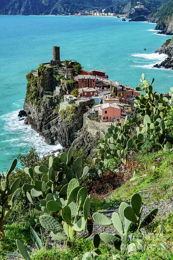 Cactus, Turquoise Water And Village Of Corniglia, Cinque Terre, Italy by Global Light Photography - Nicole Leffer