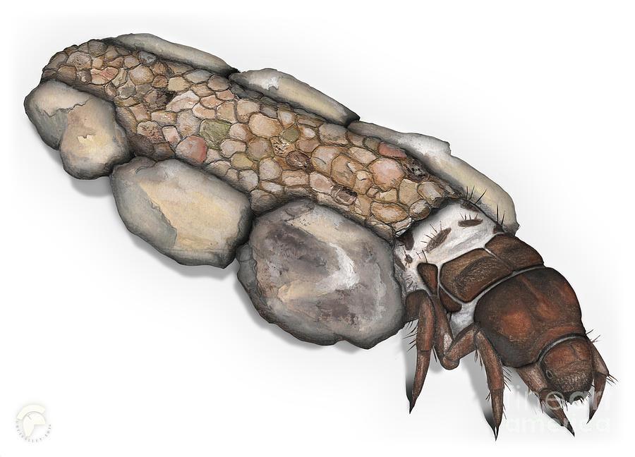 Caddisfly Larva Nymph Goeridae_silo_pallipes - Painting