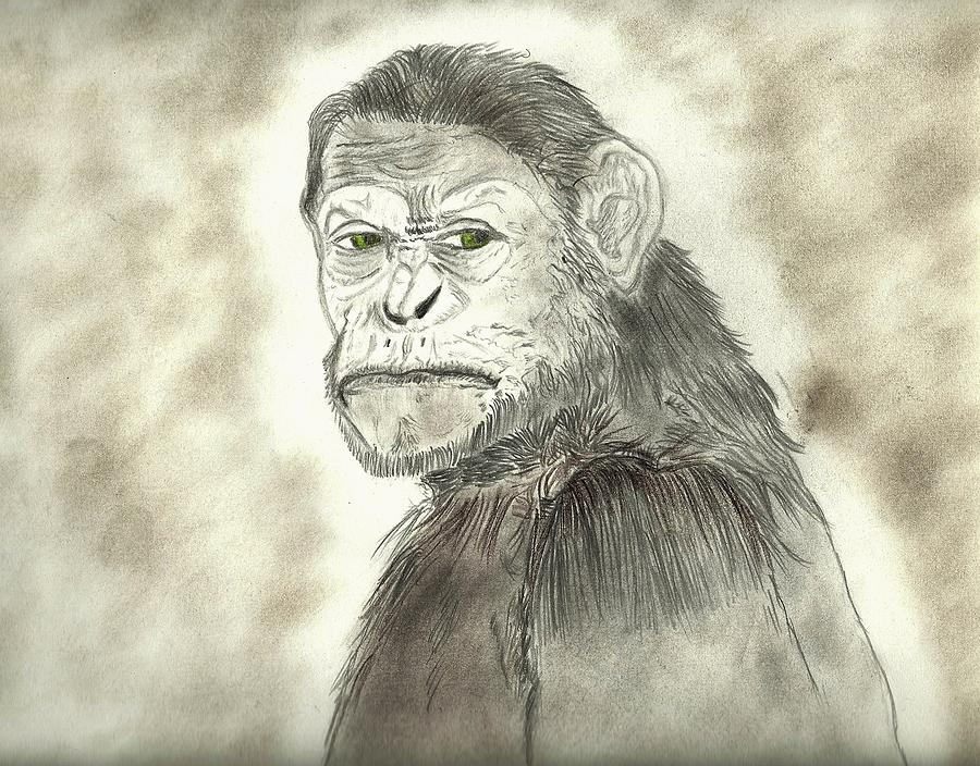 Planet Of The Apes Drawing - Caesar by Nicole Burrell