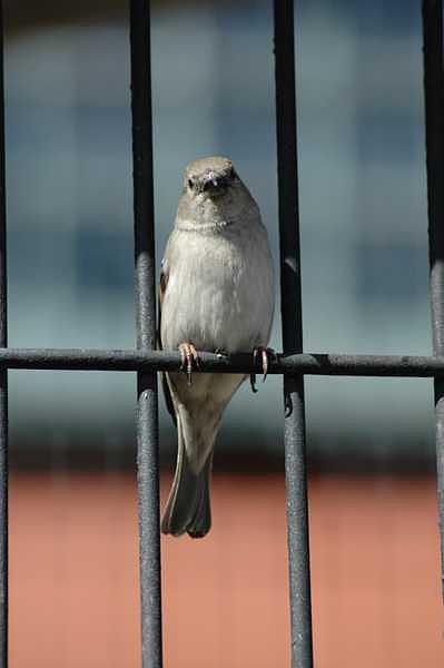 Bird Photograph - Caged by Adrian Brown