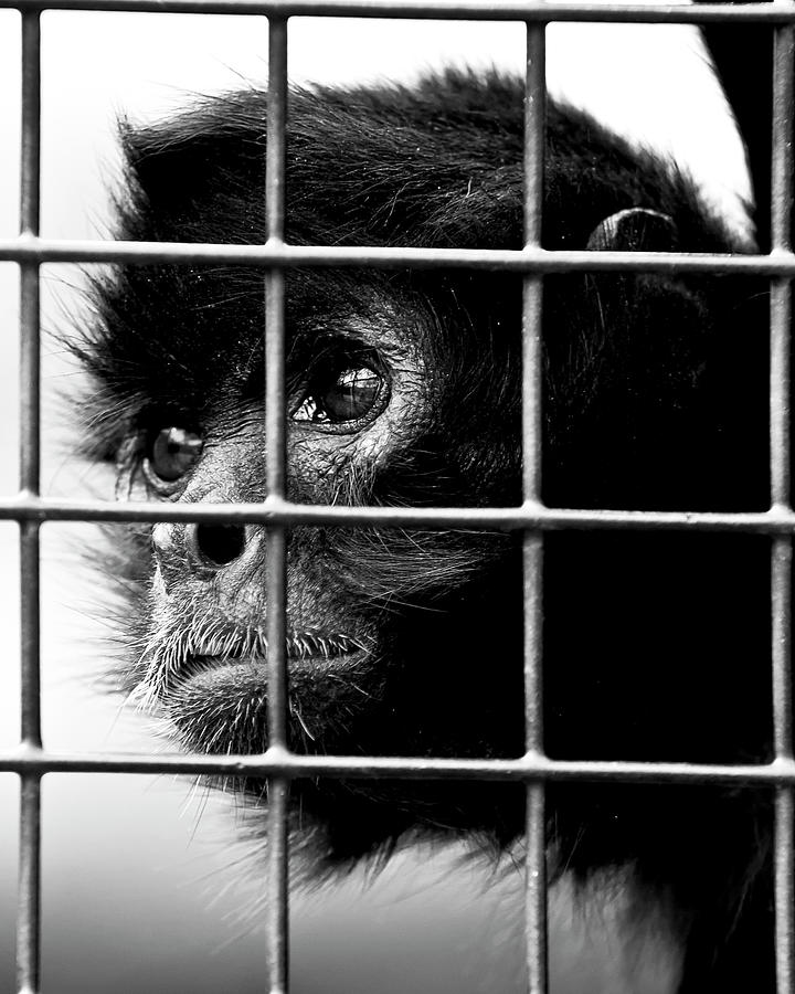 Animal Photograph - Caged by Ron  McGinnis
