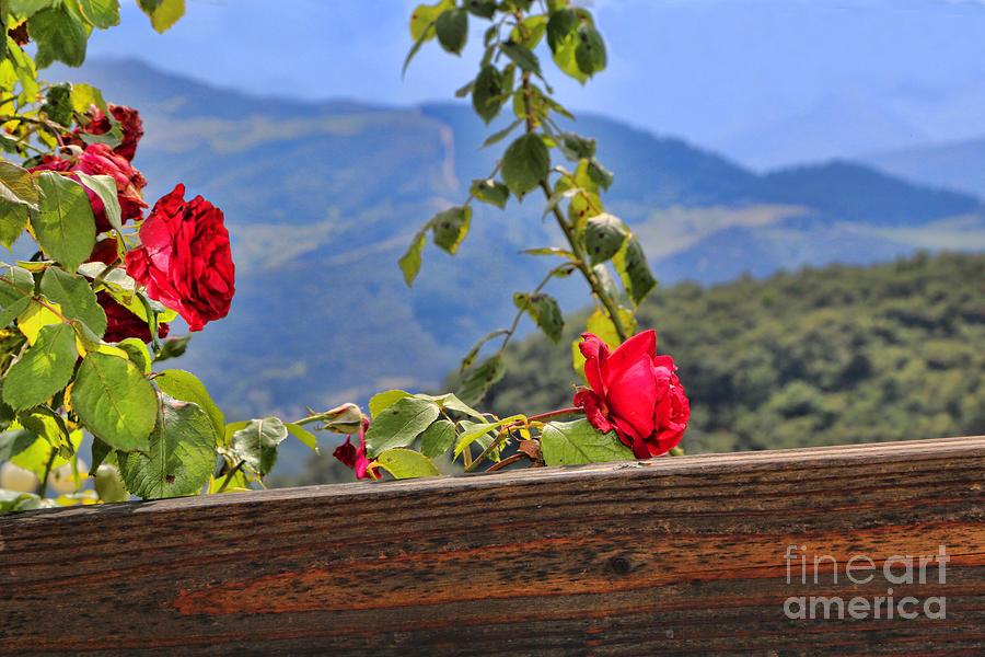Cahecho 155A7783a by Diana Raquel Sainz