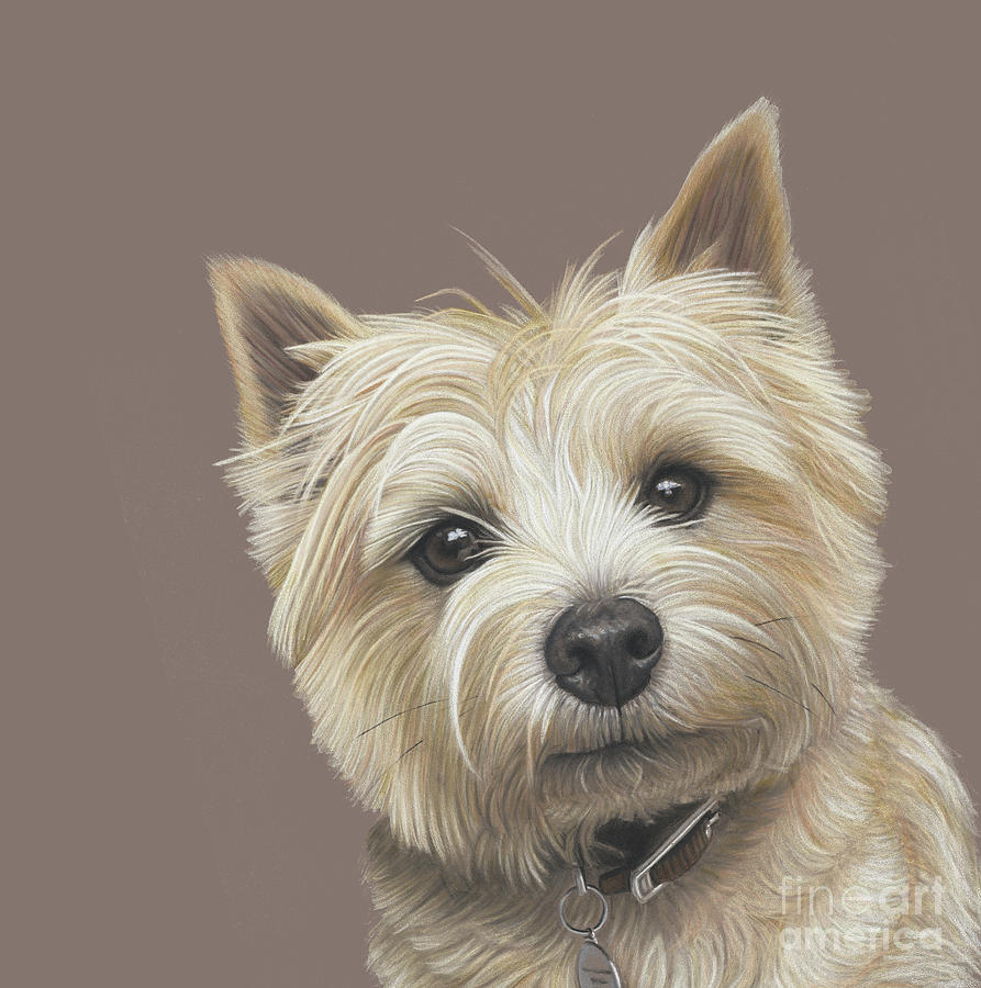 Cairn Terrier Painting - Cairn Terrier - Dave by Donna Mulley