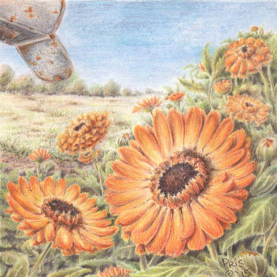 Calendula Blooms by Pris Hardy