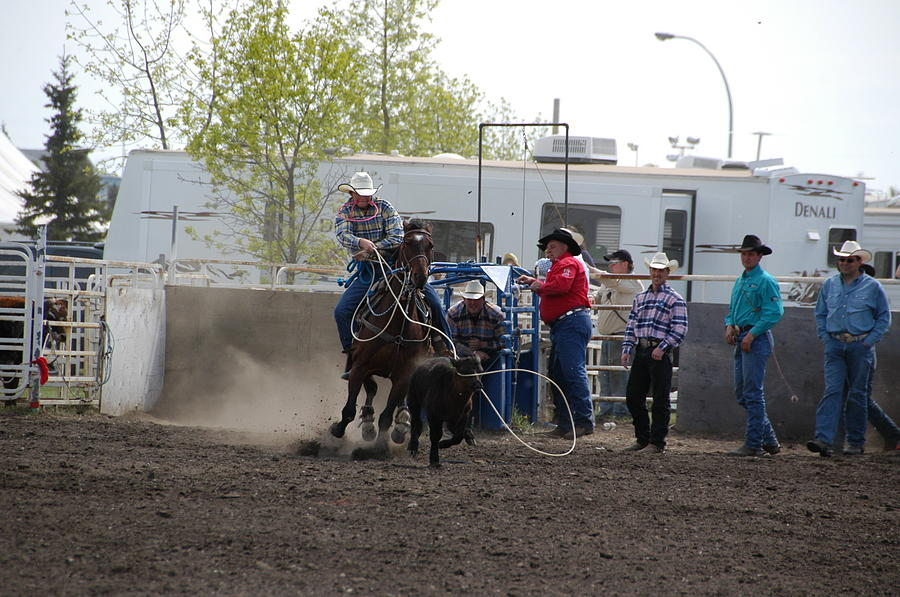 Rodeo Photograph - Calf Roping by Marj Beach