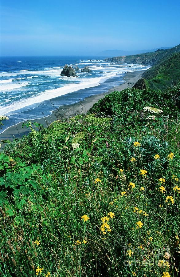 Flowers Photograph - California Coast by Ronnie Glover