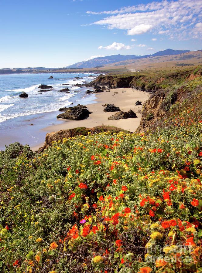 California Photograph - California Coast Wildflowers Vertical Format by Dan Carmichael
