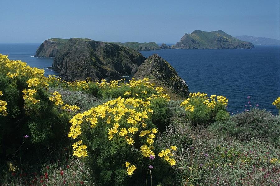 California Photograph - California Island Sunshine by Don Kreuter